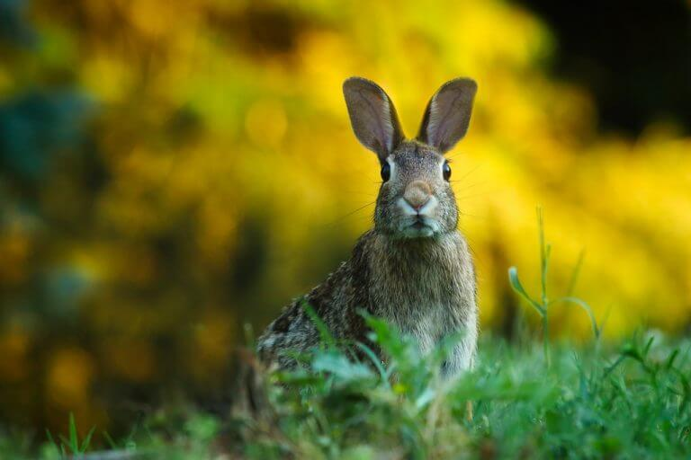 How to Check Your Cosmetics for Cruelty-Free Makeup